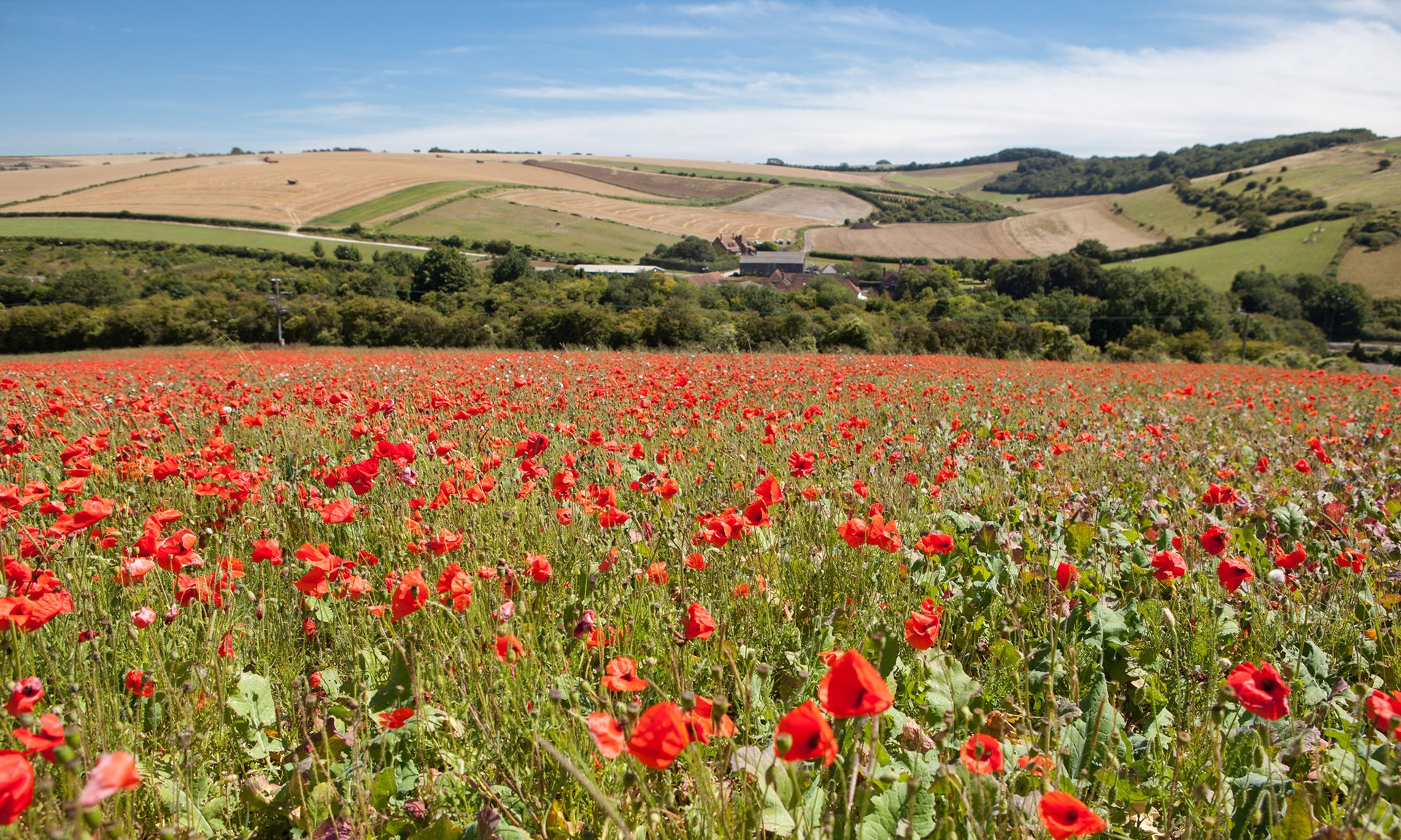 Stubble-plains and the fume of poppies around Winchester (and in         Keats's poem), the South Downs Way (click to enlarge)