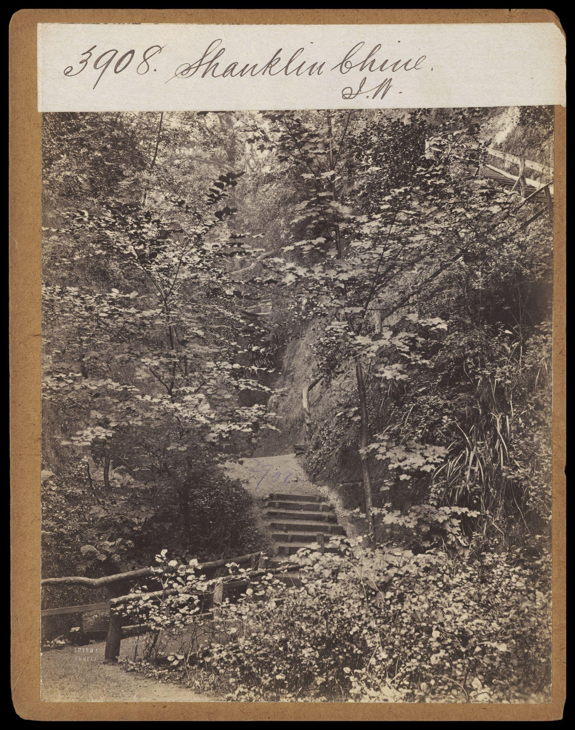***Photograph by Francis Frith; part of the Shanklin Chine path, c.1860 (Victoria         and Albert Museum E.208:3190-1994). Click to enlarge.