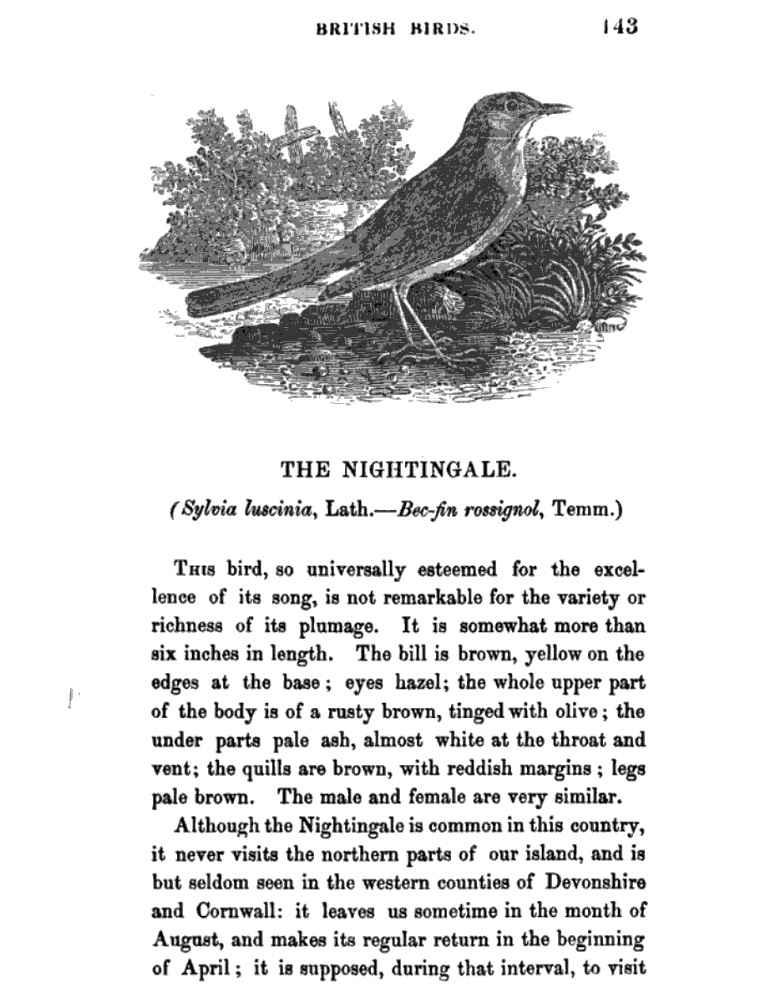 From Thomas Bewick's A History of British Birds (vol 1, p.143),         1797-1804. Click to enlarge.
